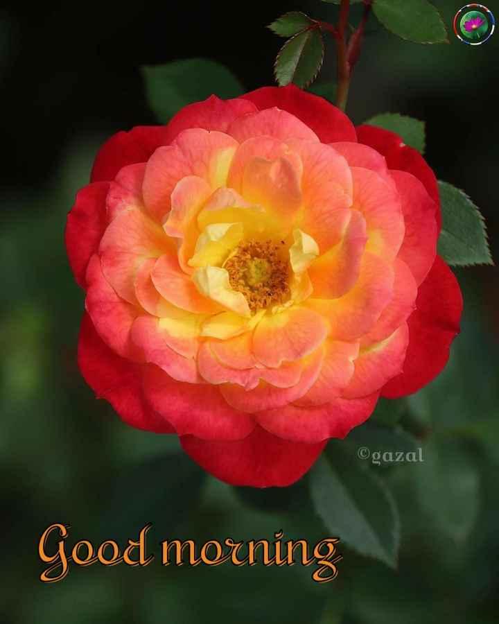 🌞 ഗുഡ് മോണിംഗ് - ©gazal Good morning - ShareChat