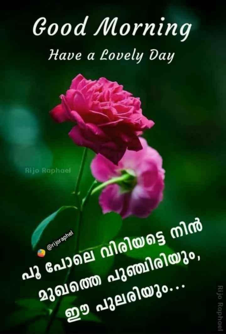 🌞 ഗുഡ് മോണിംഗ് - Good Morning Have a Lovely Day Rijo Raphael @ rijoraphel പൂ പോലെ വിരിയട്ടെ നിൻ മുഖത്തെ പുഞ്ചിരിയും , ഈ പുലരിയും . . . Rijo Raphael - ShareChat