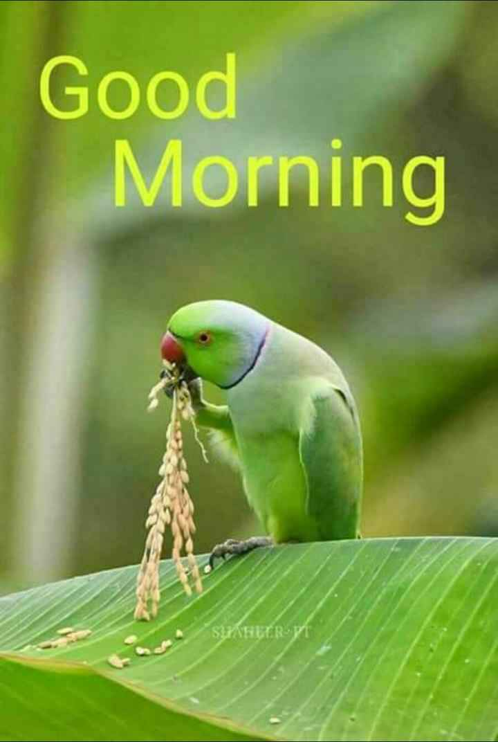🌞 ഗുഡ് മോണിംഗ് - Good Morning SHAHEER VI - ShareChat