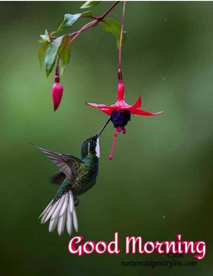 🌞 ഗുഡ് മോണിംഗ് - Good Morning naturestapestrylm . com - ShareChat