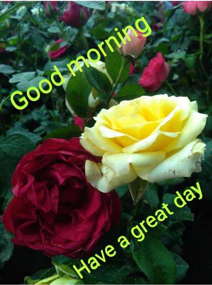 🌞 ഗുഡ് മോണിംഗ് - Good morning Have a great day - ShareChat