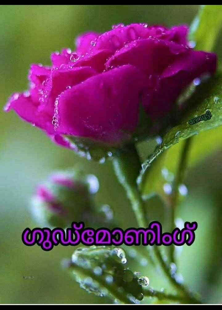 🌞 ഗുഡ് മോണിംഗ് - ട്ടി യുമോണിംഗ് - ShareChat