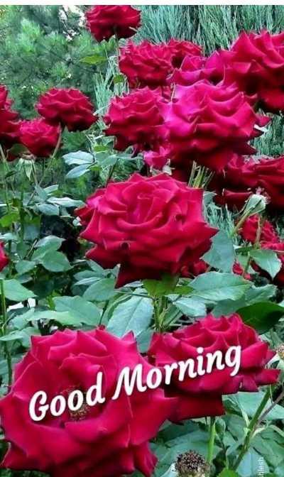 🌞 ഗുഡ് മോണിംഗ് - Good Morning chlesh - ShareChat