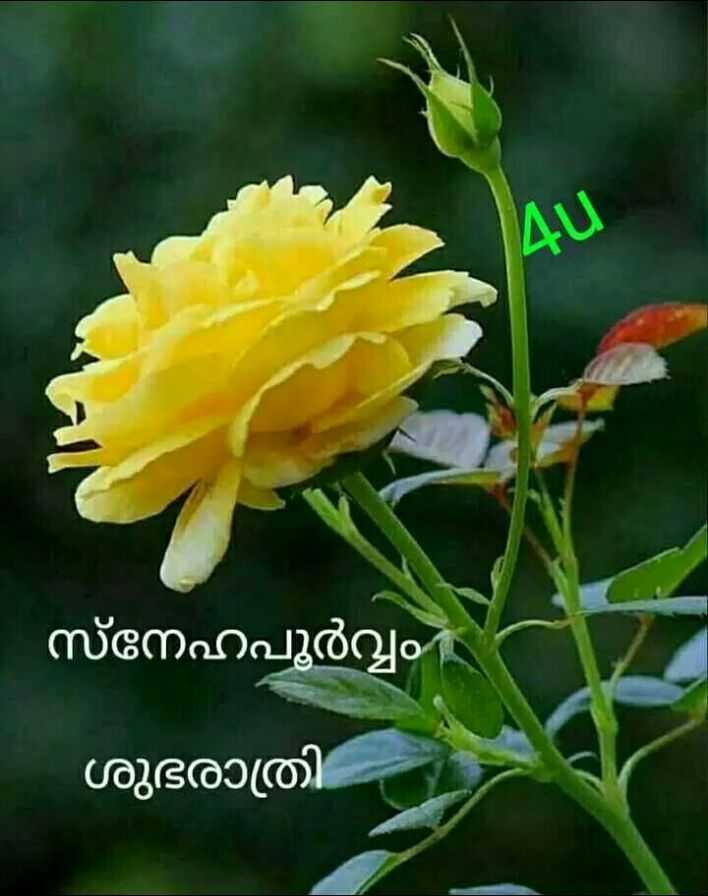 💑 സ്നേഹം - സ്നേഹപൂർവ്വം ശുഭരാത്രി - - ShareChat