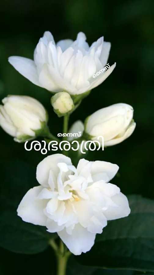 💑 സ്നേഹം - നെസ് നെസ് ശുഭരാത്രി - ShareChat
