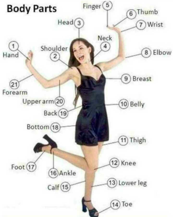 👩‍💻english నేర్చుకుందాం - Finger 6 Thumb 7 Wrist Body Parts Head Shoulder @ Neck Hand 8 Elbow 9 Breast Forearm Upper arm 20 Back 19 Bottom 18 10 Belly 11 Thigh 12 Knee Foot 17 16 Ankle Calf 15 13 Lower leg 14 Toe - ShareChat