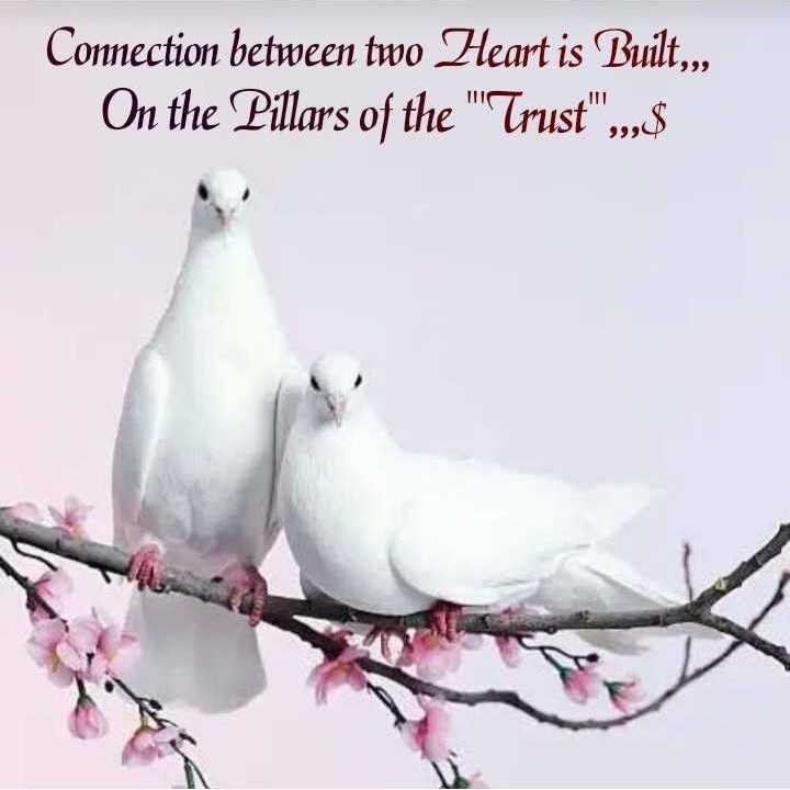 ✍️కోట్స్ - Connection between two Heart is Built , , , On the Pillars of the Trust , $ - ShareChat