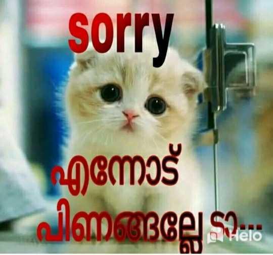 ❣എന്റെ സ്റ്റാറ്റസ്❣😊😍😎 - sorry എന്നോട് പിണങ്ങല്ലേ ? - D - ShareChat