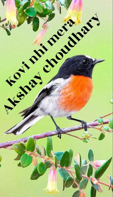 ❤ Miss you😔 - Akshay choudhary Kovi nhi mera - ShareChat