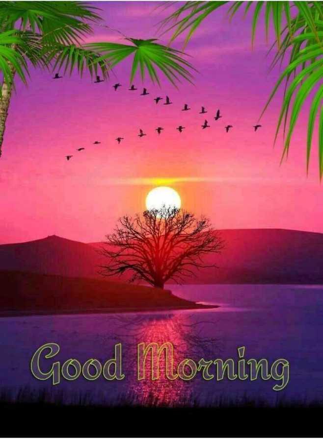 ☀️गुड मॉर्निंग☀️ - ! Good Morning - ShareChat
