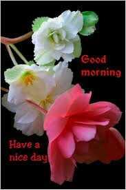 ☀️गुड मॉर्निंग☀️ - Good morning Have a nice day - ShareChat