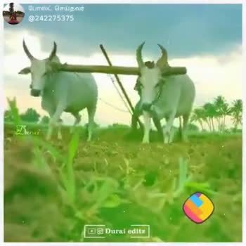 👫 நம் வாழ்க்கை - ShareChat