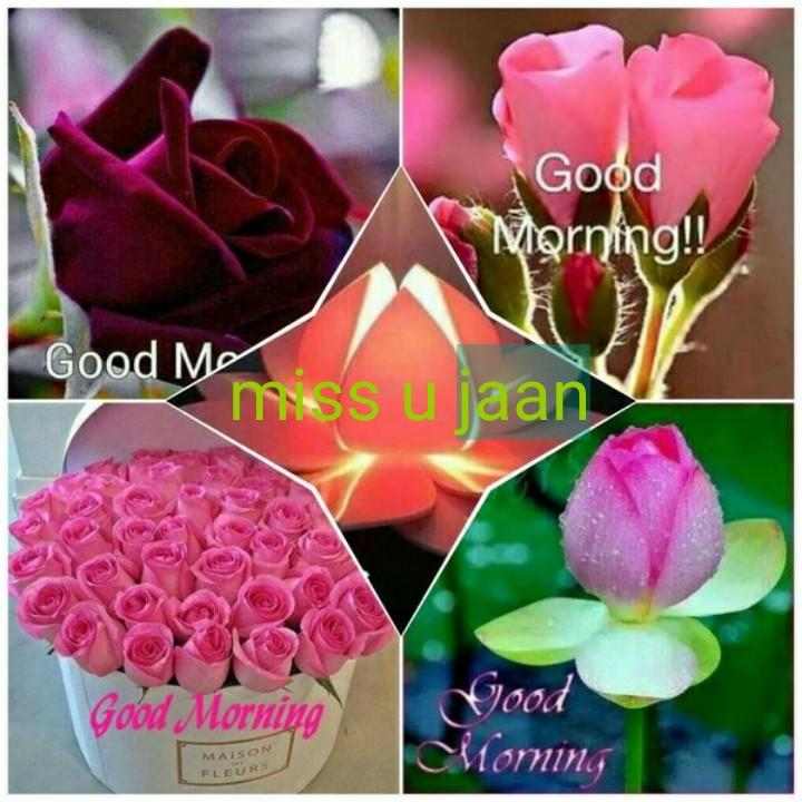 🤵miss u👉❤️👰 - Good Morning ! ! Good Morniss jaan Good Morning Good Morning MAISON - ShareChat