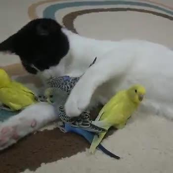 animal video - ShareChat