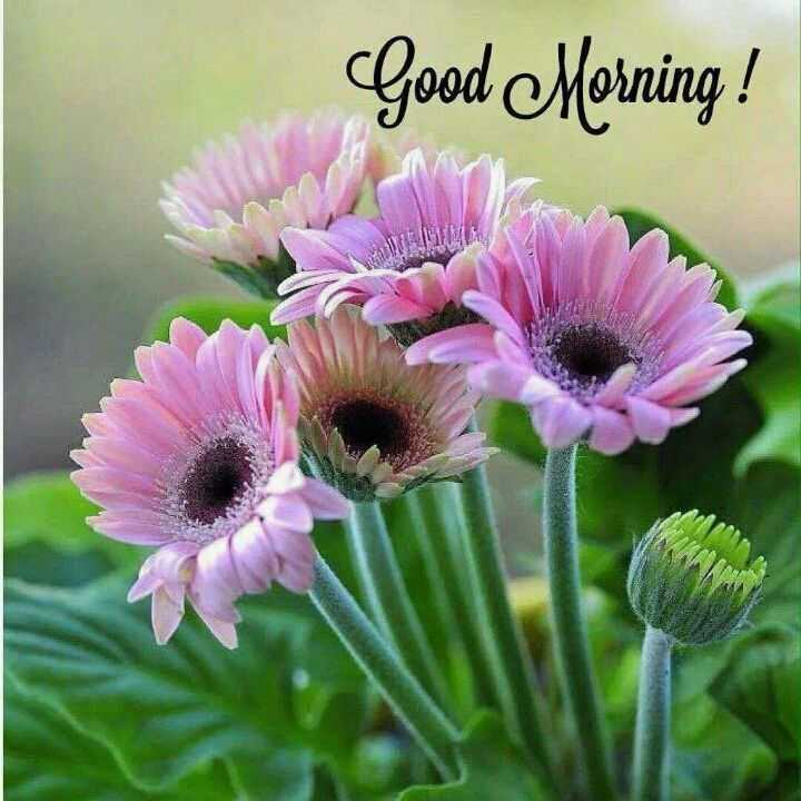 😊 2019 નો છેલ્લો શુક્રવાર - Good Morning ! - ShareChat