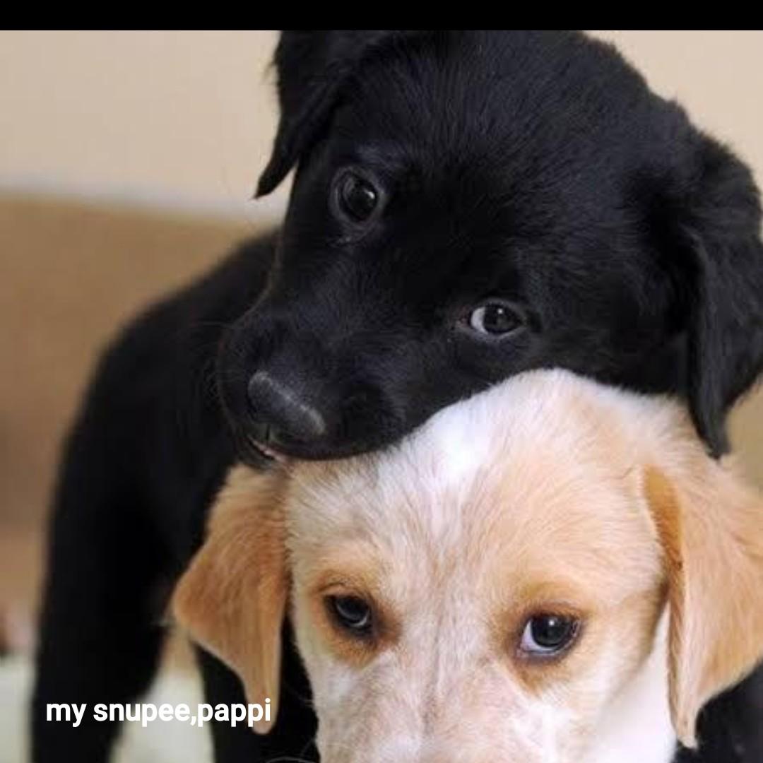 🎶బ్లాక్&వైట్ ఛాలెంజ్ - my snupee , pappi - ShareChat