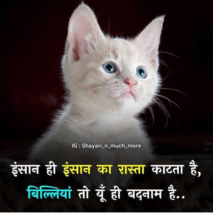 🎦 ABP Viral videos - IG   Shayari _ n _ much _ more इंसान ही इंसान का रास्ता काटता है , बिल्लियां तो यूँ ही बदनाम है . . - ShareChat