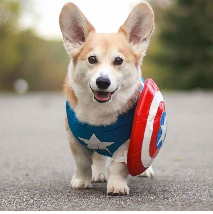 American dog - ShareChat