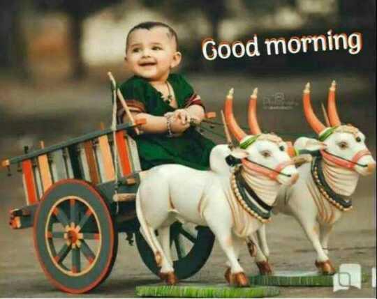 🌞 Good Morning🌞 - Good morning TU - ShareChat