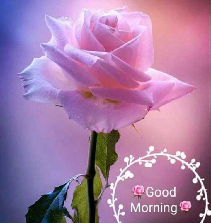 🌅 Good Morning - Good 1 . Morning - ShareChat