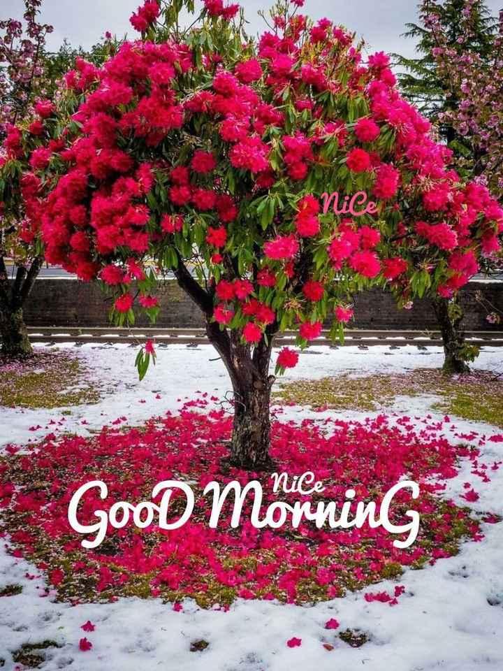 🌞Good Morning🌞 - 2K SR nice Good morning - ShareChat