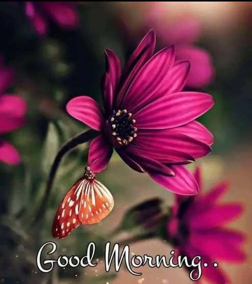 🌅 Good Morning - Good Morning . . - ShareChat