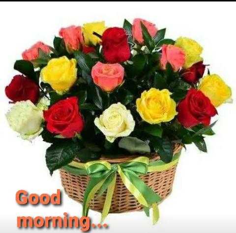 🌞 Good Morning🌞 - Good morning . . - ShareChat