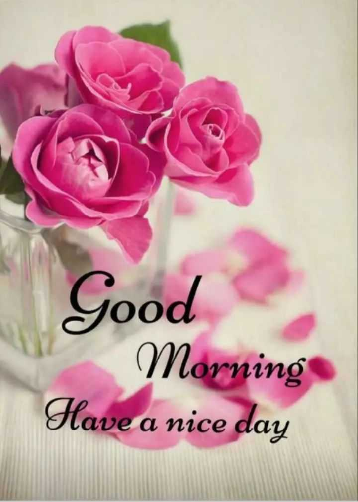 🌅 Good Morning - Good Morning Have a nice day - ShareChat