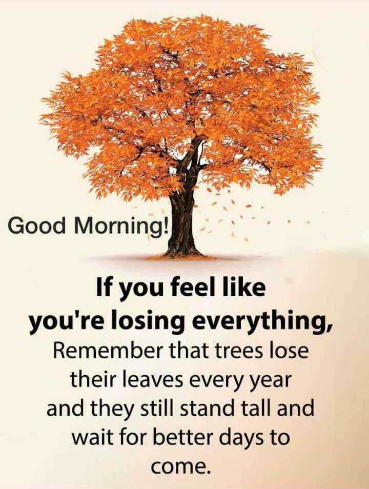 🌞 Good Morning🌞 - Good Morning ! If you feel like you ' re losing everything , Remember that trees lose their leaves every year and they still stand tall and wait for better days to come . - ShareChat