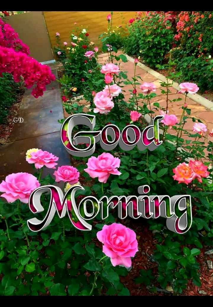 🌞 Good Morning🌞 - GD OOO Moming - ShareChat