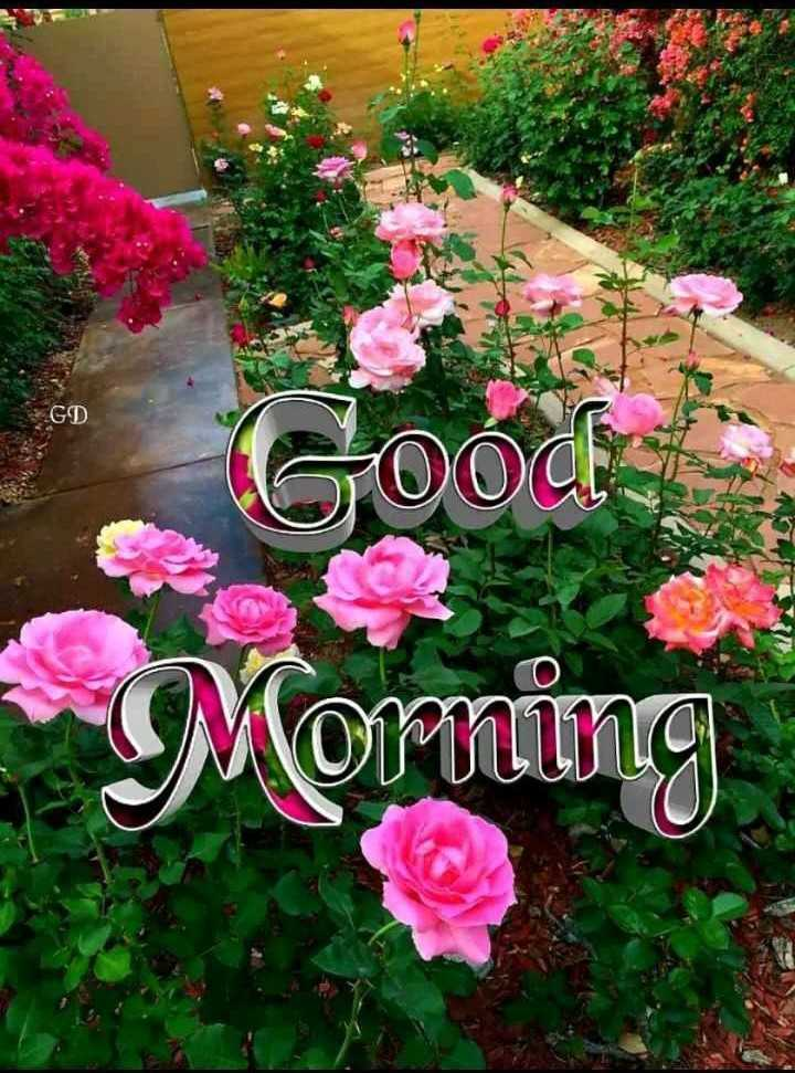🌞 Good Morning🌞 - GD 00d Morning - ShareChat