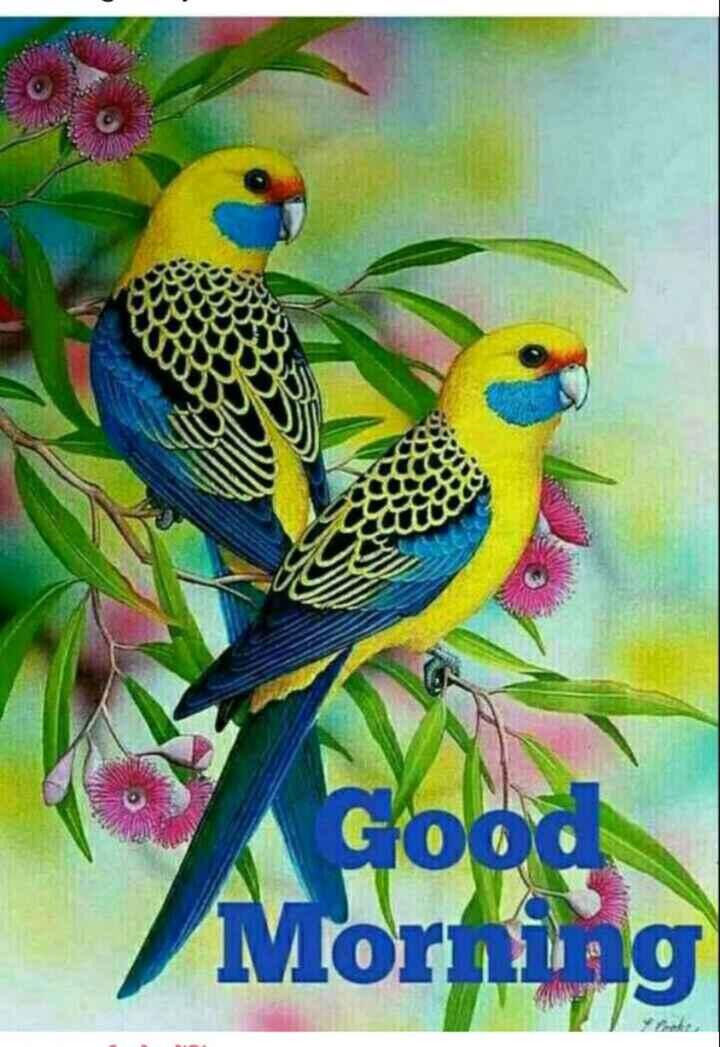 🌞 Good Morning🌞 - Morning - ShareChat