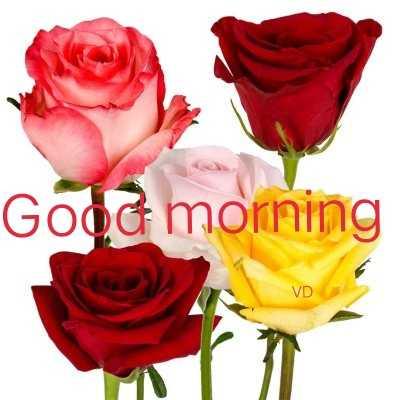 🌅 Good Morning - Good morning VD - ShareChat