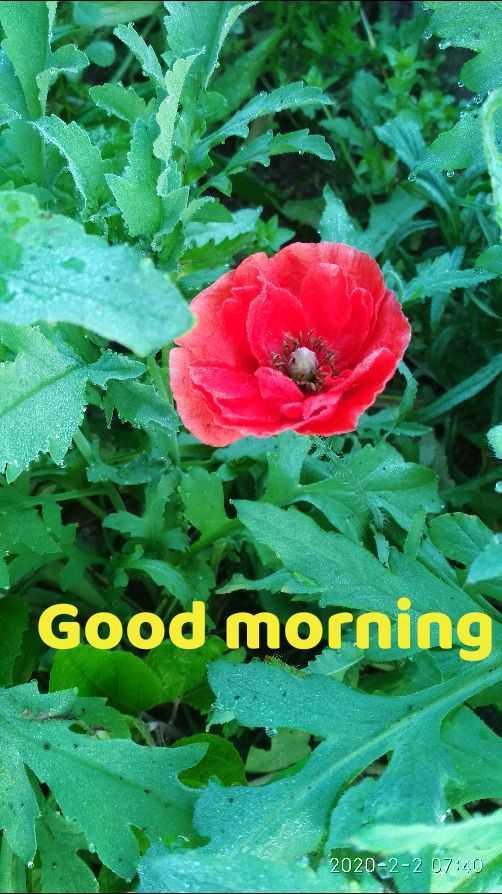 🌞 Good Morning🌞 - Good morning 2020 - 2 - 2 07 : 40 - ShareChat