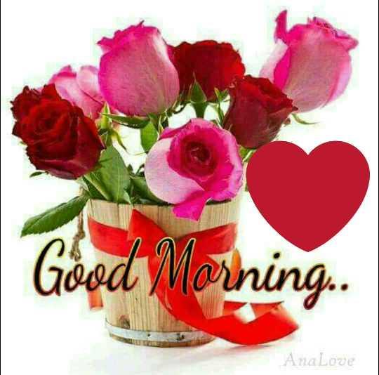 🌅 Good Morning - Good Morning . . AnaLove - ShareChat
