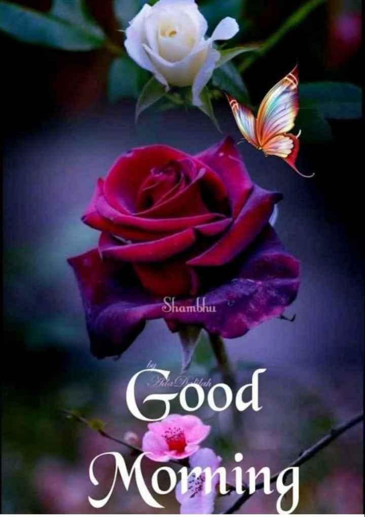 🌞 Good Morning🌞 - Ohambhu Good Morning - ShareChat