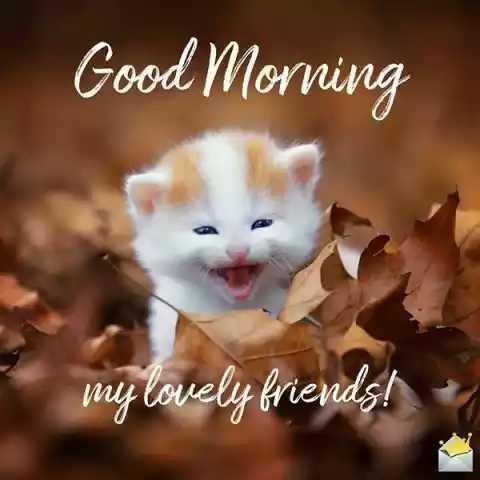 🌞 Good Morning🌞 - isprasy hana huu Good Morning - ShareChat