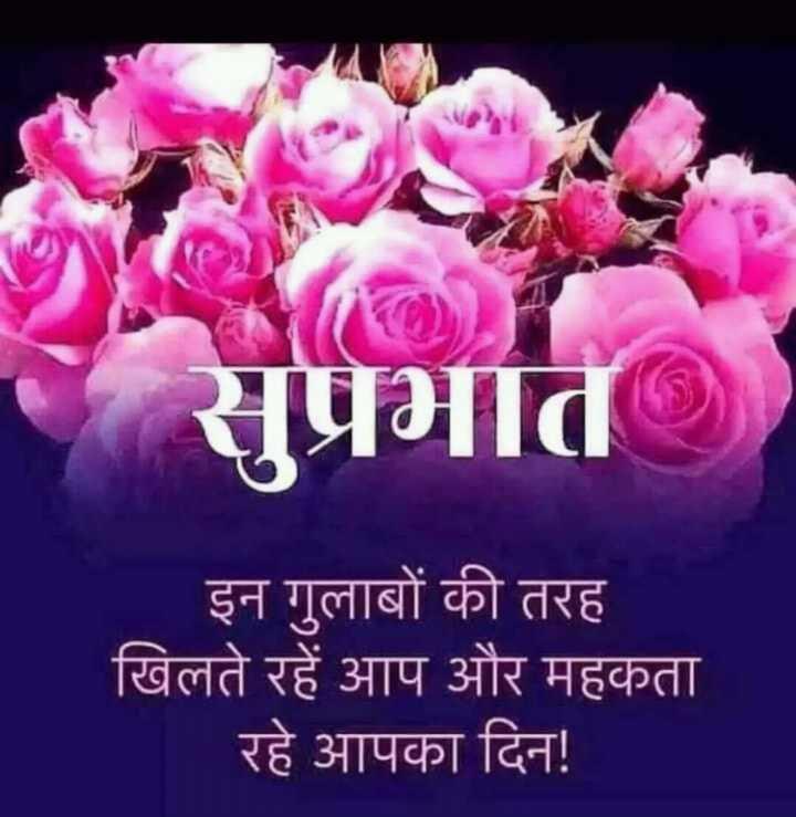 🌞 Good Morning🌞 - সার इन गुलाबों की तरह खिलते रहें आप और महकता । रहे आपका दिन ! - ShareChat