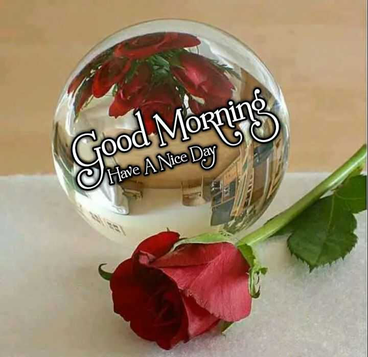 🌞 Good Morning🌞 - Good Morning C Have A Nice Day - ShareChat