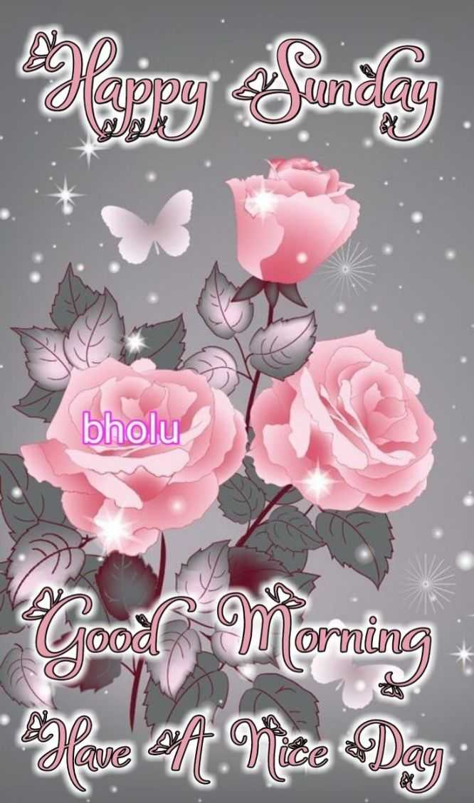 🌞 Good Morning🌞 - bholu ju orning have en Vize Day - ShareChat