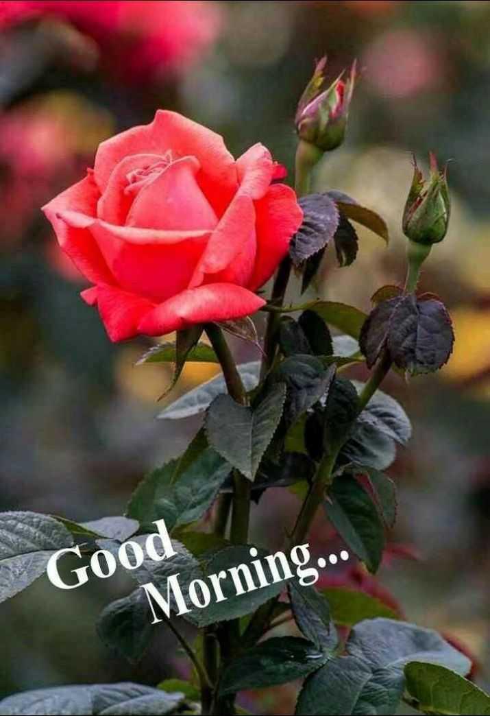 🌅 Good Morning - * Good Morning . . . - ShareChat