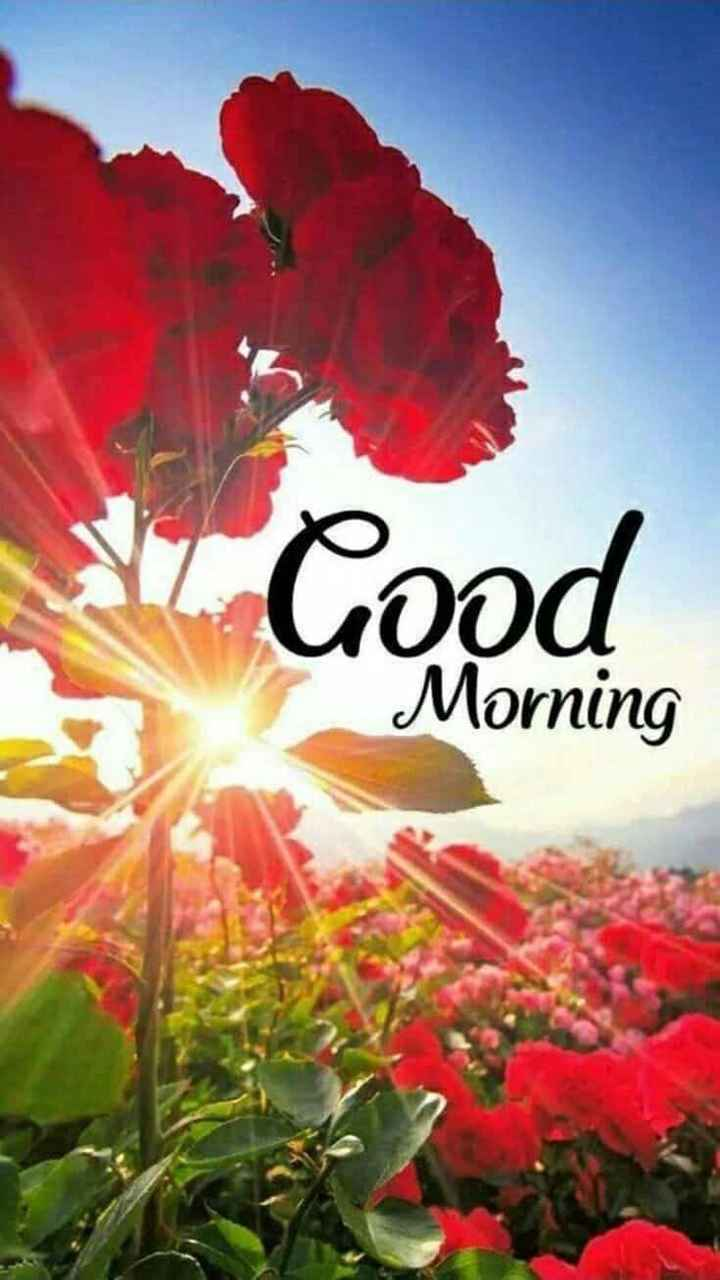 🌞 Good Morning🌞 - Good 000 Morning - ShareChat