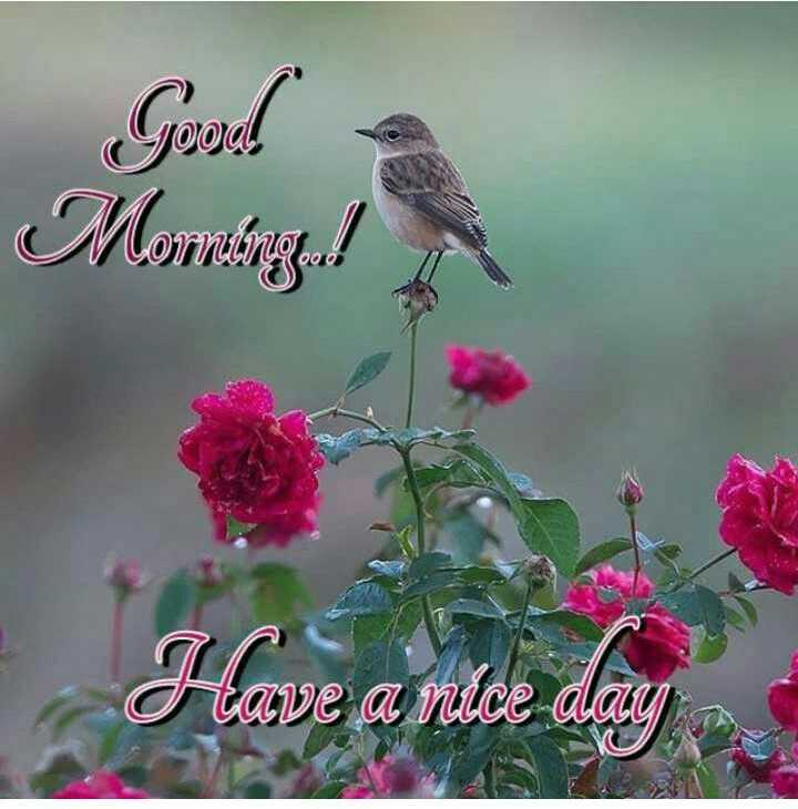🌞 Good Morning🌞 - Good Monting ! tave a nice a - ShareChat