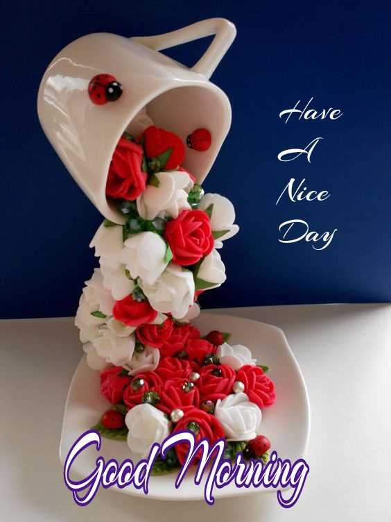 🌞 Good Morning🌞 - Have d Nice Day Good Morning - ShareChat