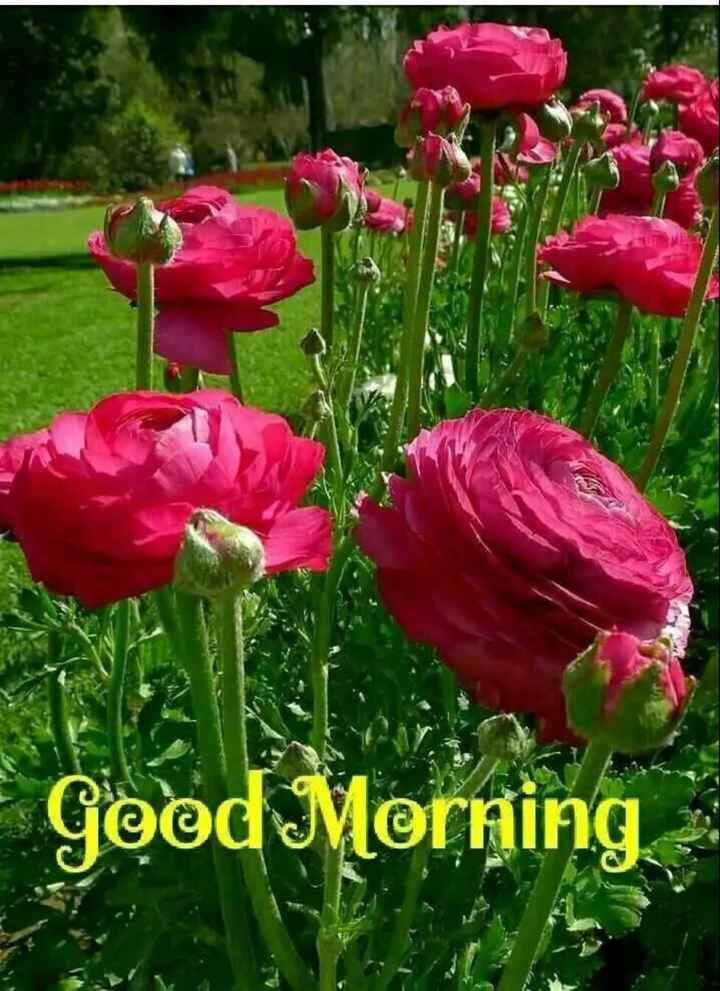 🌞 Good Morning🌞 - Geod Morning - ShareChat