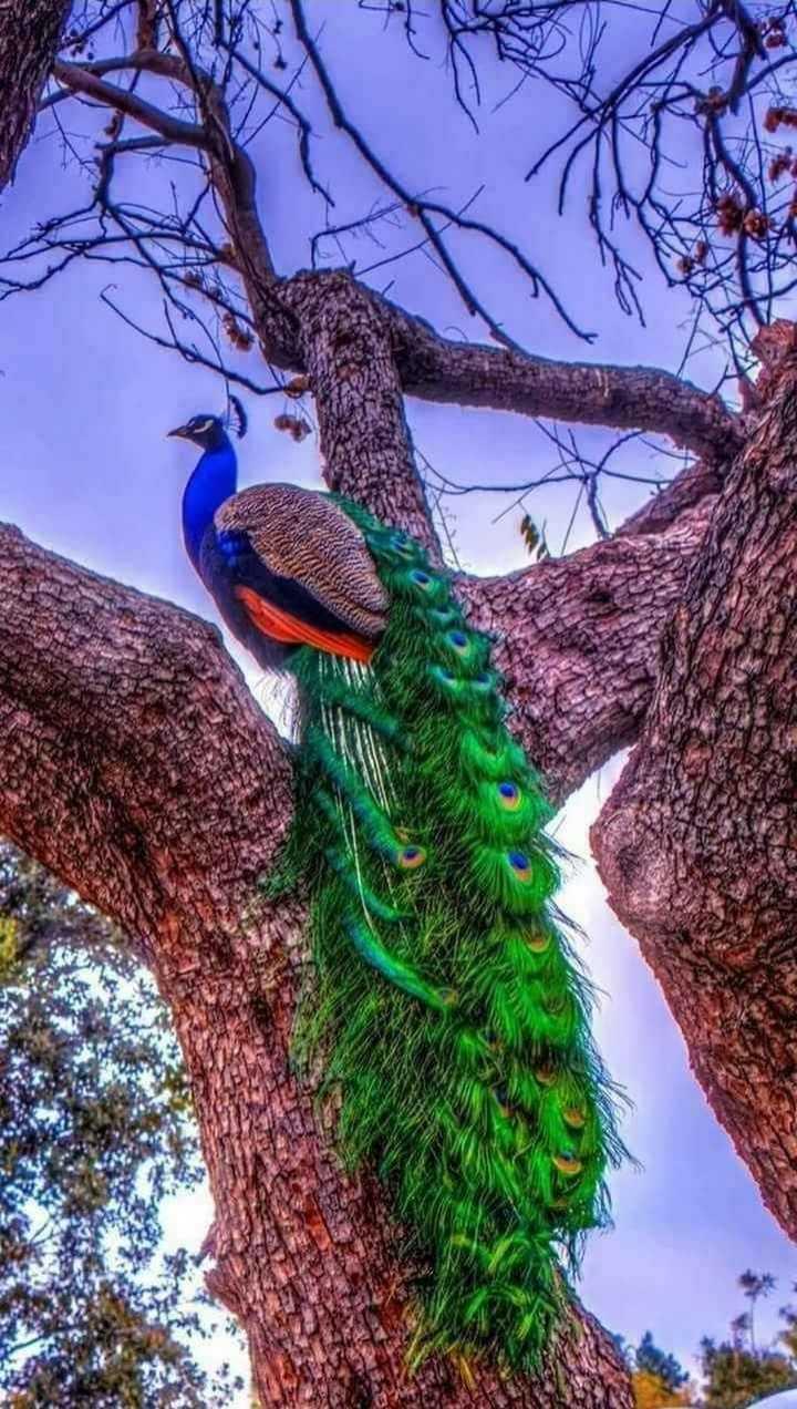#bird# - ShareChat