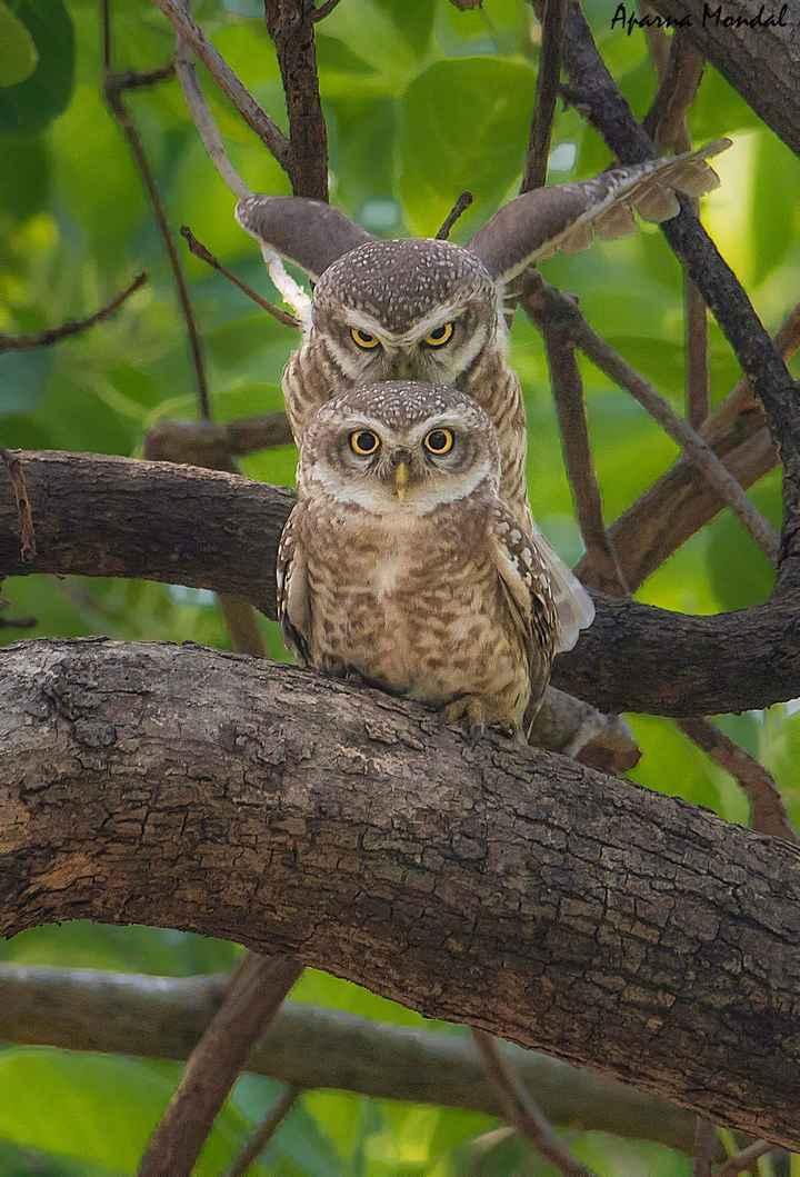 #bird# - Aparna Mondal - ShareChat