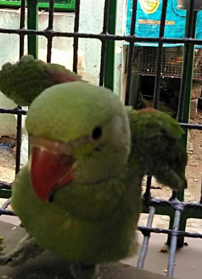 #bird# - te home AOY AGROVETS LTD Dayahanda Floor negro www . royagcove HIT 13 2 3 - ShareChat
