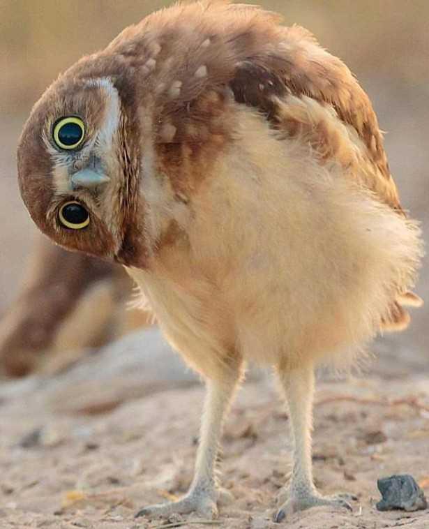cute birds - ShareChat