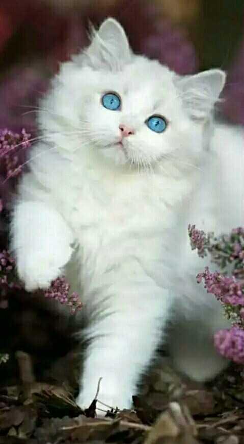 Whatsapp Status Cute Cat Whatsapp Dp Stati Di Whatsapp